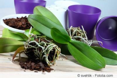 Material beim Orchideen umtopfen