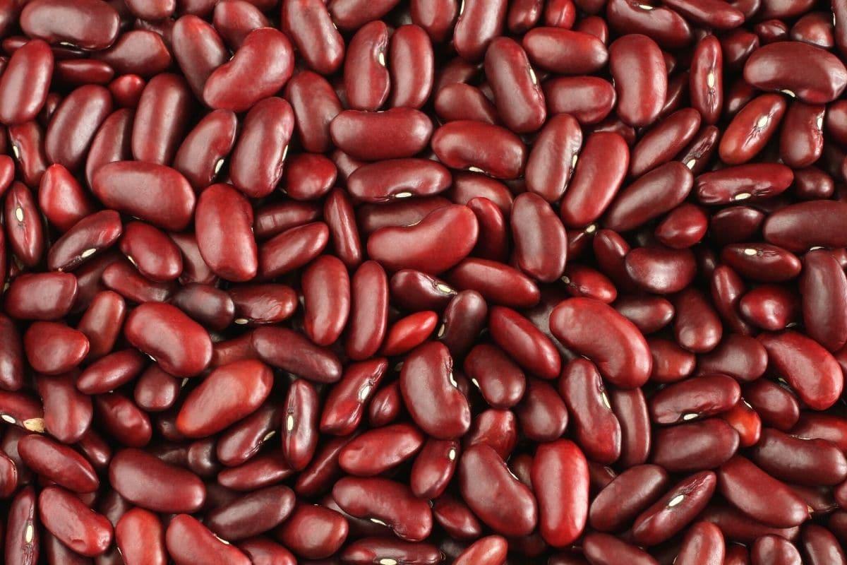 Bohnensorten - Kidneybohnen