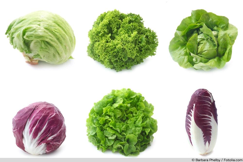 Salatsorten-Collage