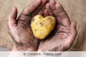 Gute Pflanznachbarn: Kartoffeln