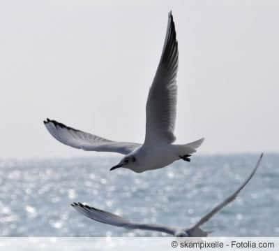 Guano-Dünger von Seevögeln