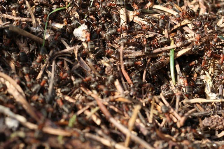 Mittel Gegen Ameisen Im Garten Rasen Haus Backpulver Co