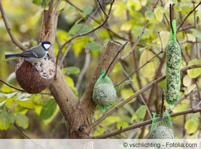 Winterfütterung von Vögeln