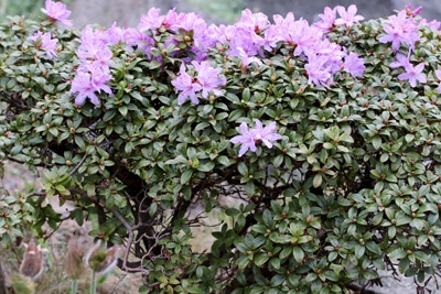 Schattenblumen Liste Bluhender Schattenpflanzen