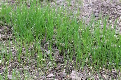 Rasen frisch gesät