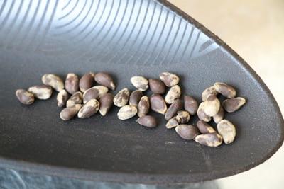 Baumwolle-Samen
