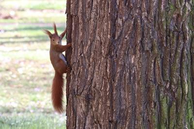 sind eichhörnchen nachtaktiv