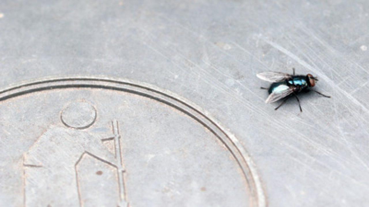 kleine schwarze fliegen in der wohnung im winter