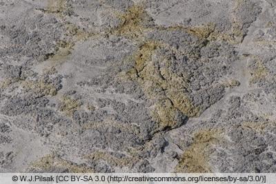 Kieselgurschicht auf Steinboden