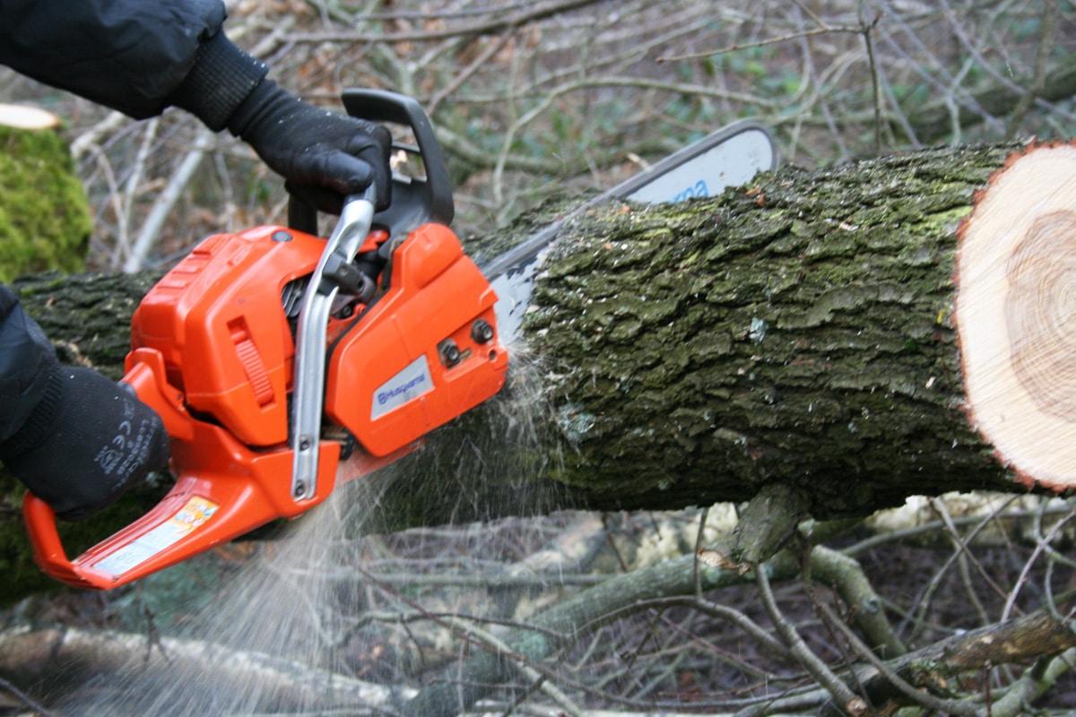 Baum schneiden mit Kettensäge