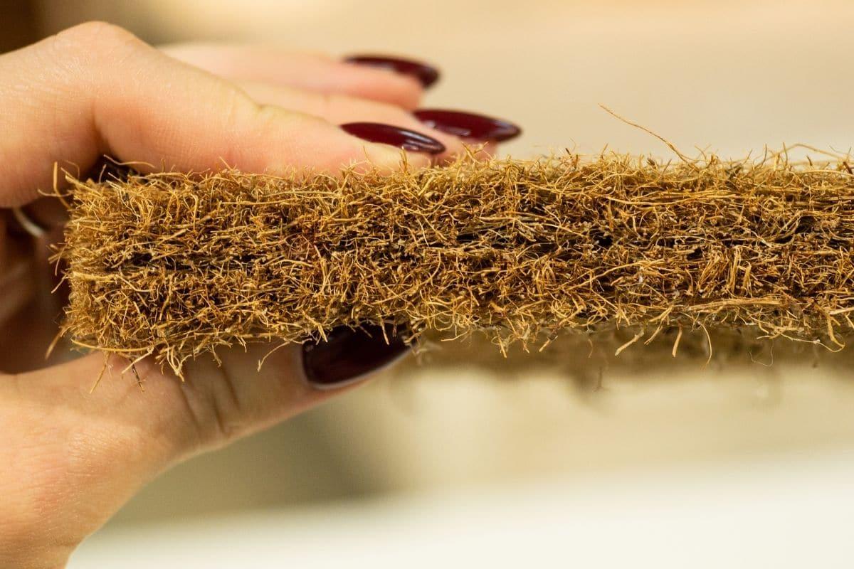 Palmlilie richtig überwintern - Hand hält Kokosmatte