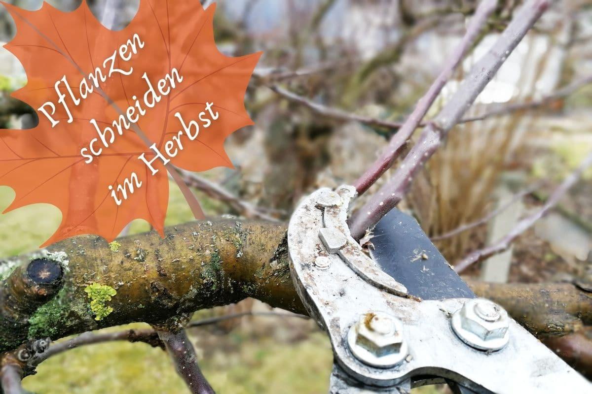 Pflanzen im Herbst zurückschneiden - Apfelbaum