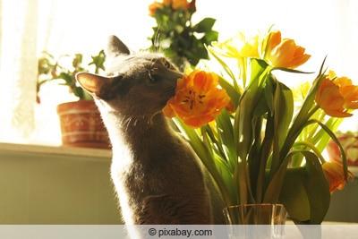 verblühte tulpen schneiden