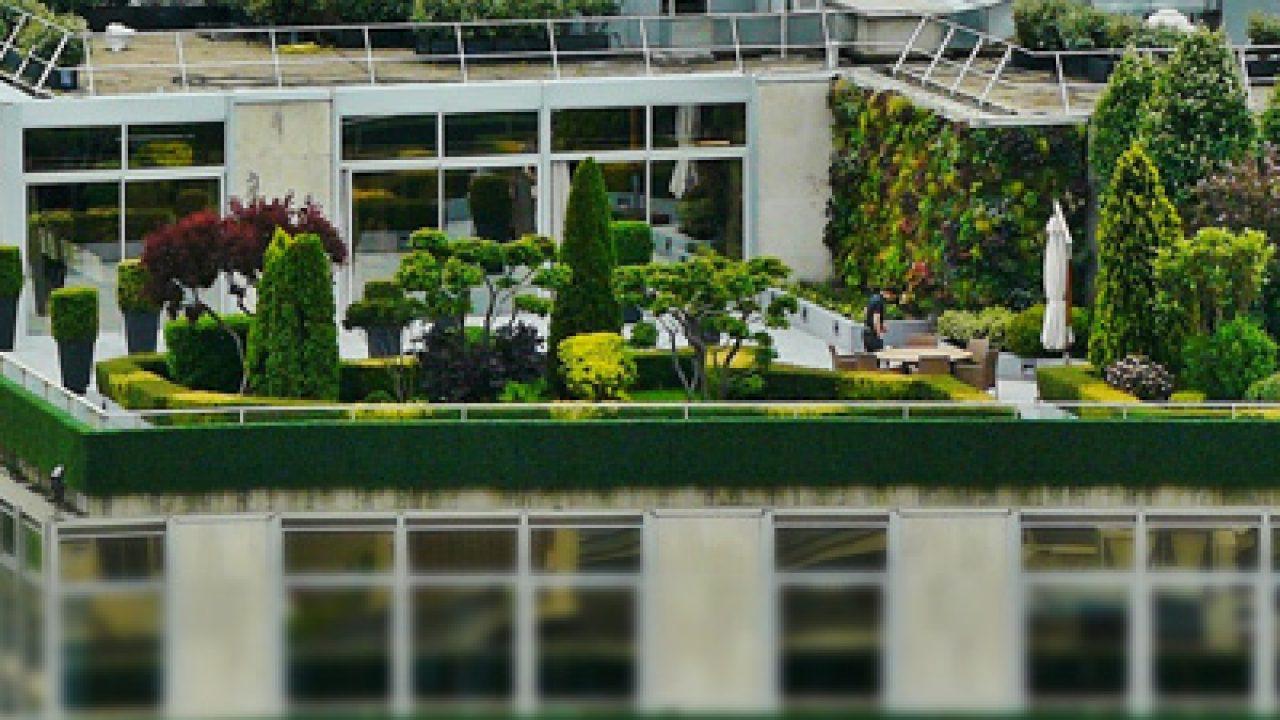 Dachterrasse Bepflanzen 48 Geeignete Pflanzen Und Ideen