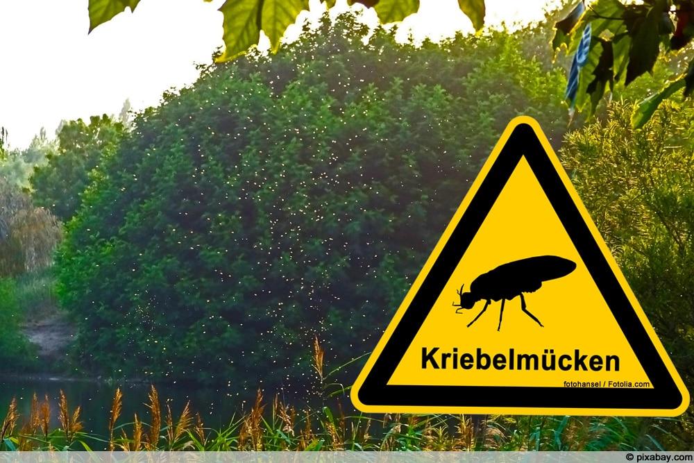Kriebelmücken im Garten