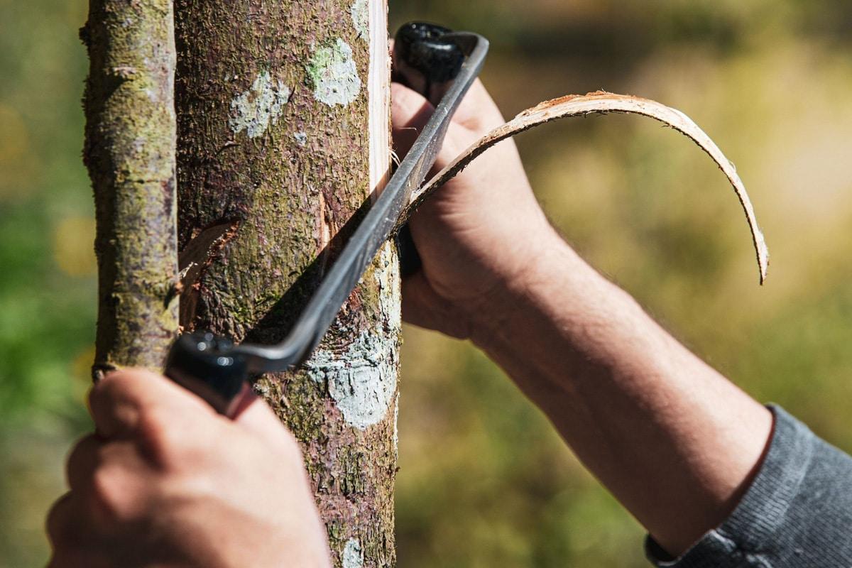 Baum absterben lassen - Zugmesser schneidet Baumstamm