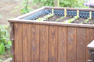 erdbeerenpflanzen im hochbeet