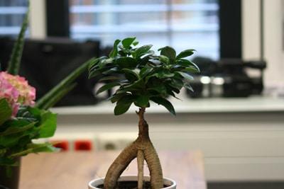 bonsai im dunklen raum