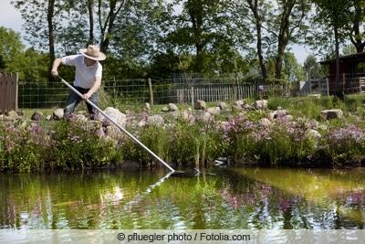 Gärtner reinigt Teich