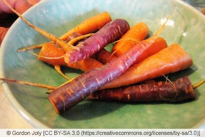 Karottensorte 'Purple Haze' und 'Egmont Gold'