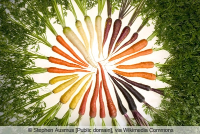 Karottensorten