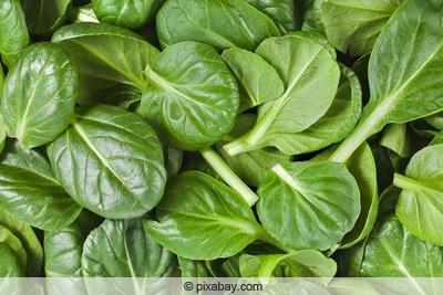 spinacia oleracea echter spinat
