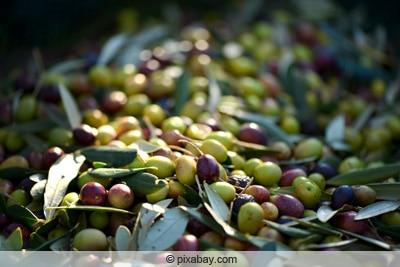 gruen-gelbliche und rot-violette oliven