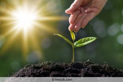 jungpflanze im sonnenschein