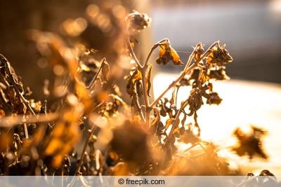 vertrocknete pflanze im sonnenlicht