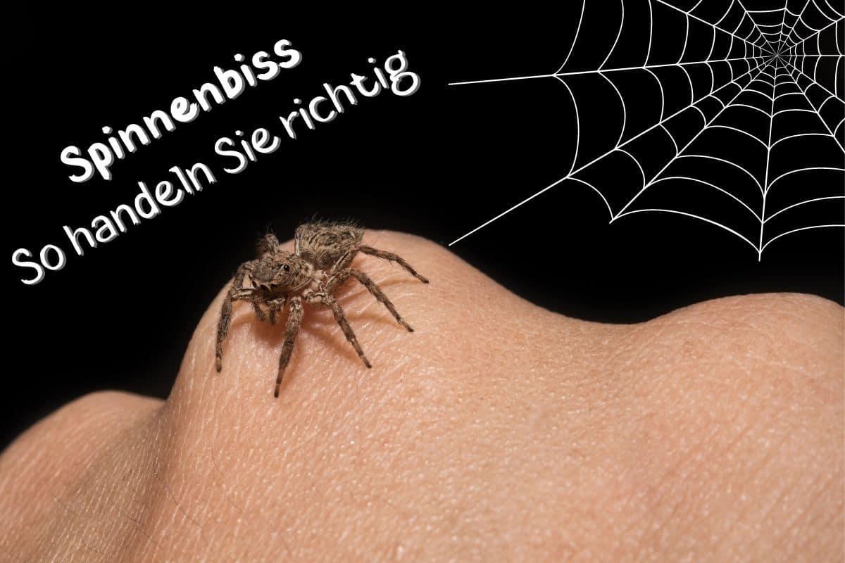 Spinnenbiss - Spinne auf Hand