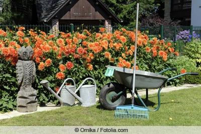 Gartenwerkzeug vor Dahlienbeet