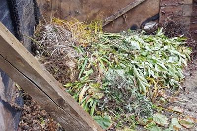 Pflanzenreste auf dem Kompost
