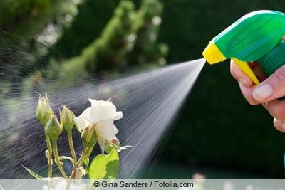 Sprühen der Flüssigkeit auf Pflanze