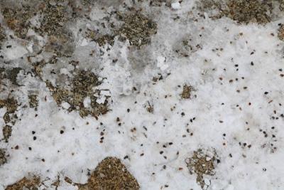 Mit Schnee, Streu und Salz bedeckte Pflastersteine