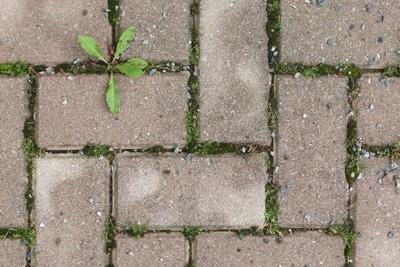 Weiße Flecken auf Pflastersteinen