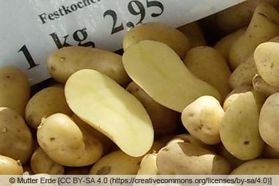 Kartoffelsorte 'Amandine'
