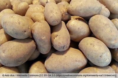 Kartoffelsorte 'Annabelle'