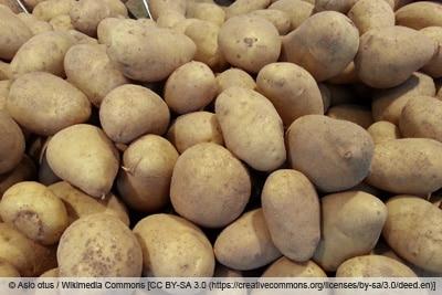 Kartoffelsorte 'Cilena'