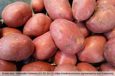 Kartoffelsorte 'Laura'