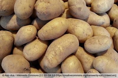 Kartoffelsorte 'Sieglinde'