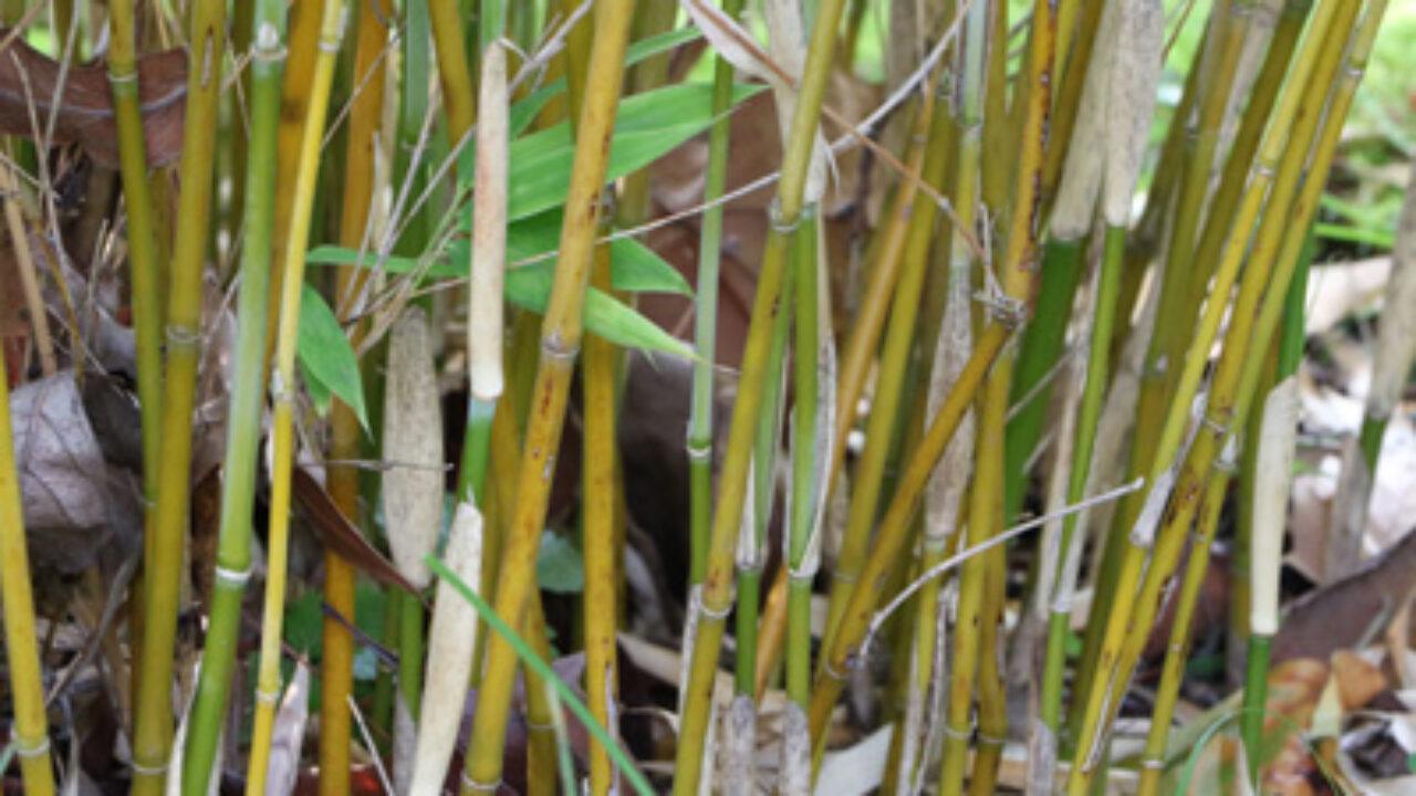 Bambusmatten Befestigen Bambus Sichtschutz Am Balkon Anbringen