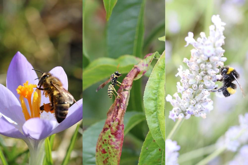 Bienen - Wespen - Hummeln
