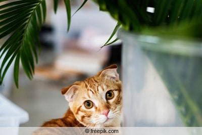 Katze schaut auf Pflanze