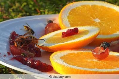 Wespen auf Teller mit Süßspeisen