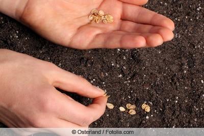 Samen in Anzuchtschale aussäen