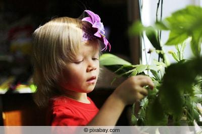 Kind spielt an Orchidee herum
