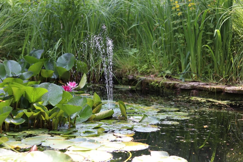 Gartenteich verliert Wasser
