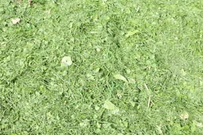 Rasenschnitt auf Rasen