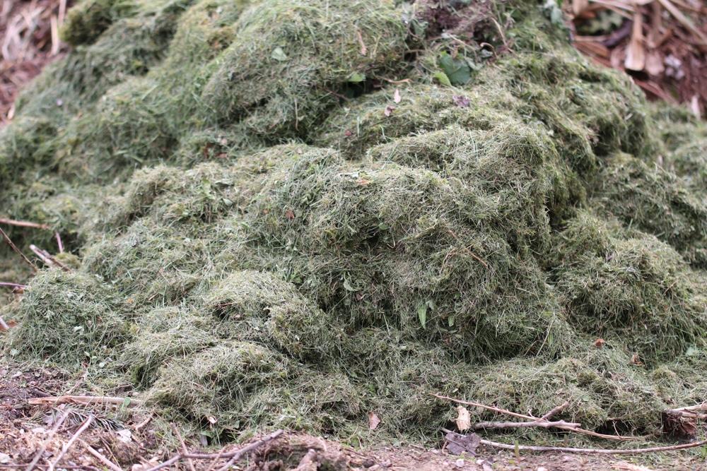 Rasenschnitt kompostieren