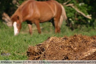 Pferdemist mit Pferd im Hintergrund